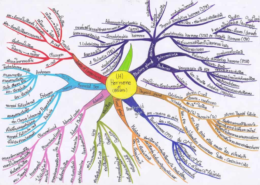 Mind Map ประกอบการเรียนในวิชาชีววิทยา